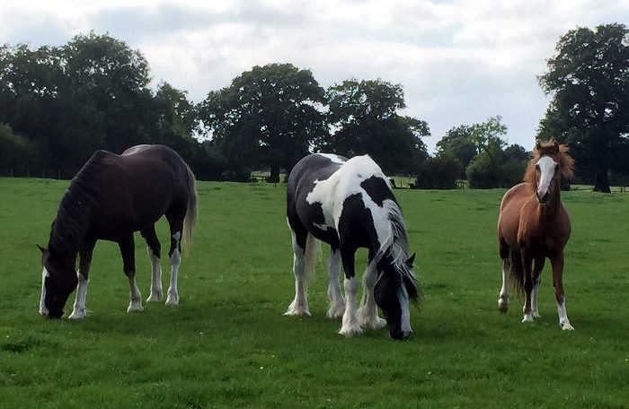 Kentish Town City Farm horses